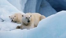 Spitzberg - Ours Polaires & Aventure Arctique (Longyearbyen) Départs du Lundi