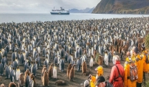 Safari Pingouin en Géorgie du Sud & Péninsule Antarctique (Ushuaia) avec Accompagnateur Francophone