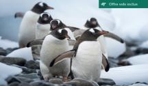 Antarctique & Îles Malouines - Aventure dans l'Hémisphère Sud, de l'Uruguay à l'Argentine (Montevideo-Ushuaïa) Vols Inclus