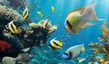 Îles Éparses & Seychelles (Croisière Expédition)