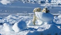 Spitzberg & Ours Polaires Aventure Arctique (Longyearbyen)