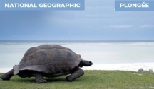 """Îles Secrètes des Seychelles & Atoll d'Aldabra (Croisière Expédition) avec """"Natioanl Geographic"""""""