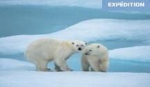 L'Essentiel du Spitzberg (Longyearbyen) : Croisière Expédition avec Vols