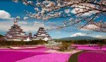 NOUVEAU Au Pays du Soleil Levant : Japon & Taïwan (Tokyo)