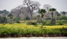 Sur les Fleuves de Gambie (Banjul)