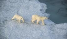 Expédition Autour du Spitzberg : Sur les Terres de l'Ours Blanc (Oslo)