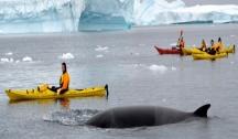Antarctique Express : Survolez le Drake (Punta Arenas) avec Accompagnateur Francophone