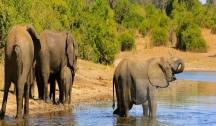 L'Afrique Australe Déroule ses Plus Beaux Paysages (Johannesburg) 10 A