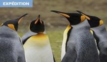 De l'Antarctique à l'Afrique (Ushuaïa-Le Cap) Croisière Expédition
