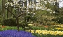 La Hollande, Pays des Tulipes (ANV) 5 Ancres