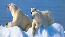 Introduction au Spitzbergen : Fjords, Glaciers & Vie Sauvage du Svalbard (Oslo/Longyearbyen) avec Accompagnateur Francophone